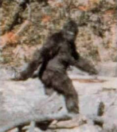 A frame from the Patterson-Gimlin film.